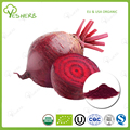 Factory beet root powder bulk