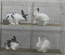 easy clean rabbit lapin cage for industrial and commercial