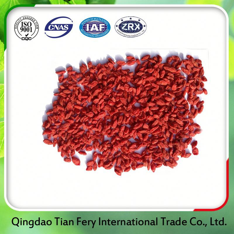 Ningxia Dried Goji Berry Farm