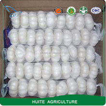 Shandong Jinxiang normal/pure white garlic in 2017 new crop