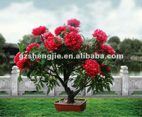 LED light tree Artificial red apple flower tree Artificial palm trees China professional biggest manufacturer 14 years