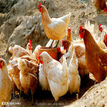 poultry premix+feed additive+livestock feed