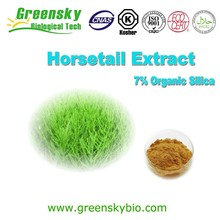 Natural Plant Field Horsetail Extract,7% Silicic Acid Horsetail Extract Powder