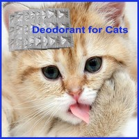 Strong Cat Deodorant Factory Supply With Hifh Quality
