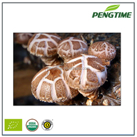 the most competitive market prices for shiitake mushroom