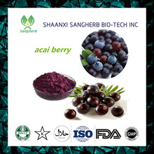 Low price of acai berry brazil export with great