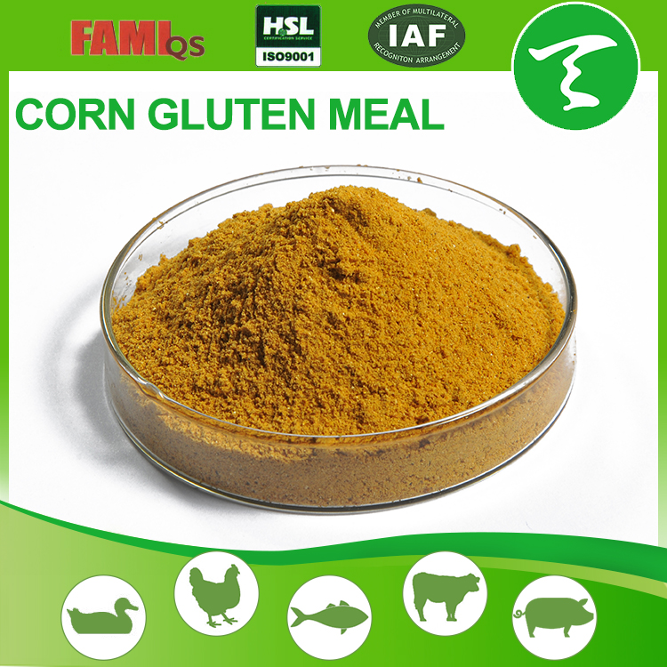 LOW Price With Good Quality gluten corn meal
