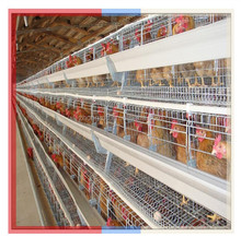 Automatic chicken poultry cage /bird breeding galvanized chicken layer cage for sale
