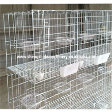 SSD specialized production pigeon cage for poultry farm