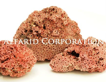 Sea Corals Natural Red Rough
