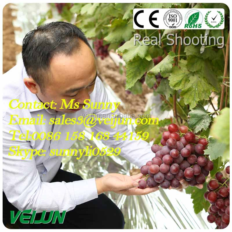 Anti Insect Net pp non-woven spun bond fabric uv protection for fruit cover grape cover