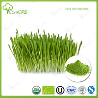 Best products superfoods barley grass juice extract barley grass juice powder extract for health functional food