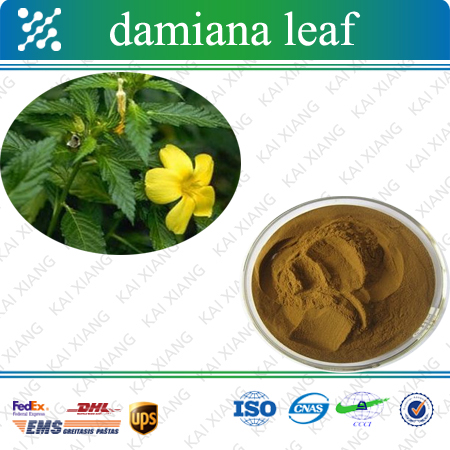 Factory Price Damiana Extract / Leaf / Bodybuilding Supplements
