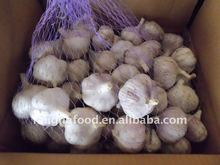 Chinese Best Quality Fresh Garlic