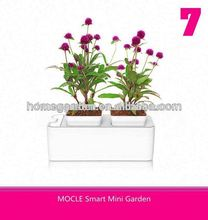 Smart Mini Garden distributors wanted in Angola