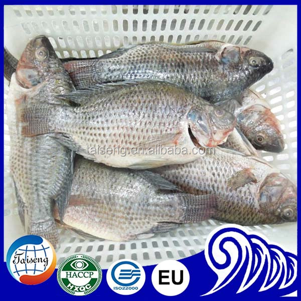 Best seafood offer of Black Tilapia /Red Tilapia