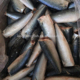 High Quality Pacific Mackerel HGT Bonito HGT For Canned fish scomber japonicus