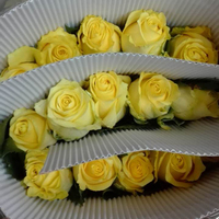 Good quality silk vision flowers wholesale kenya roses with 0.6-0.8kg