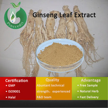 Red Panax Ginseng Extract/Ginseng Extracts/Ginseng Leaf Extract