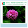 Herbal extract Manufacturer Supply Trifolium extract,Biochanin powder 98%,Red Clover Extract Biochanin A