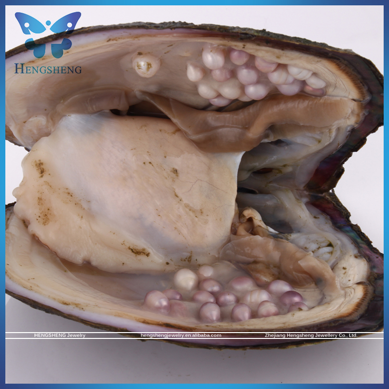 Amazing Large Yield 10-40pcs freshwater pearl oyster from zhuji pearl farm