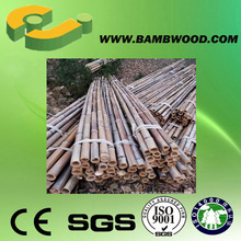 Practical Top Quality Saw Raw Bamboo Poles For Trees Supporting Useful
