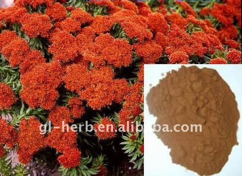 Mega Mass Rhodiola Rosea Root Extract Powder P.E