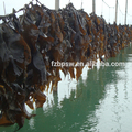 Laminaria Japonica powder / kelp powder for shrimp feed fish feed