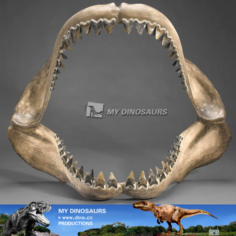 My-dino museum shark jaw skeleton replica for sale