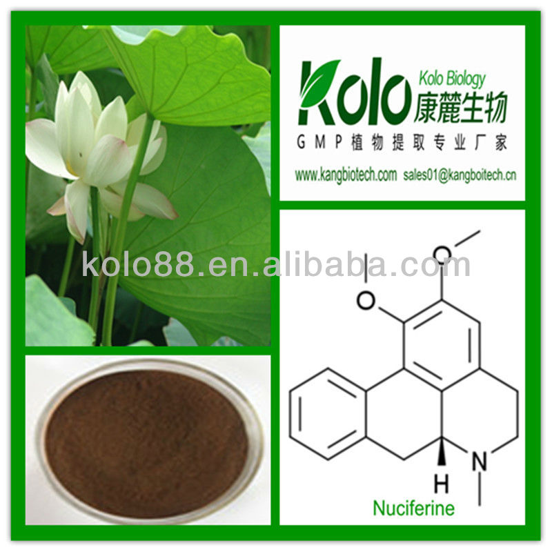 Natural lose weight herbal extract nelumbo nuciferine 2%