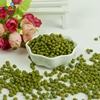 Hot sale fresh lower price for organic green mung beans