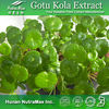 100%Nutural Supply gotu kola herb extrct,Centella Asiatica ,Asiaticoside,Madecassoside,Total Triterpenoid glycosides