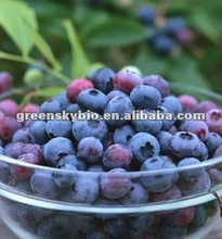 Bilberry Plants Extract for Sale