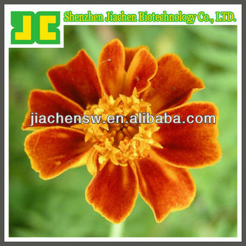 marigold flower powder extract with lutein