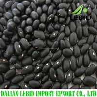 New crop Chinese Small Black beans black matpe beans