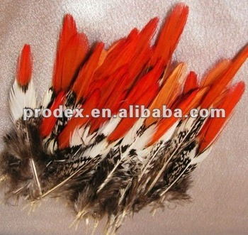 Golden pheasant red tip feather