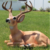 wholesale chinese large life size ceramic Deer garden statues