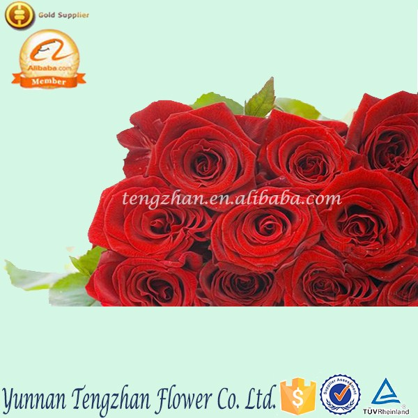 Long time preserved pink chrysanthemum fresh buy rose flowers online delivery