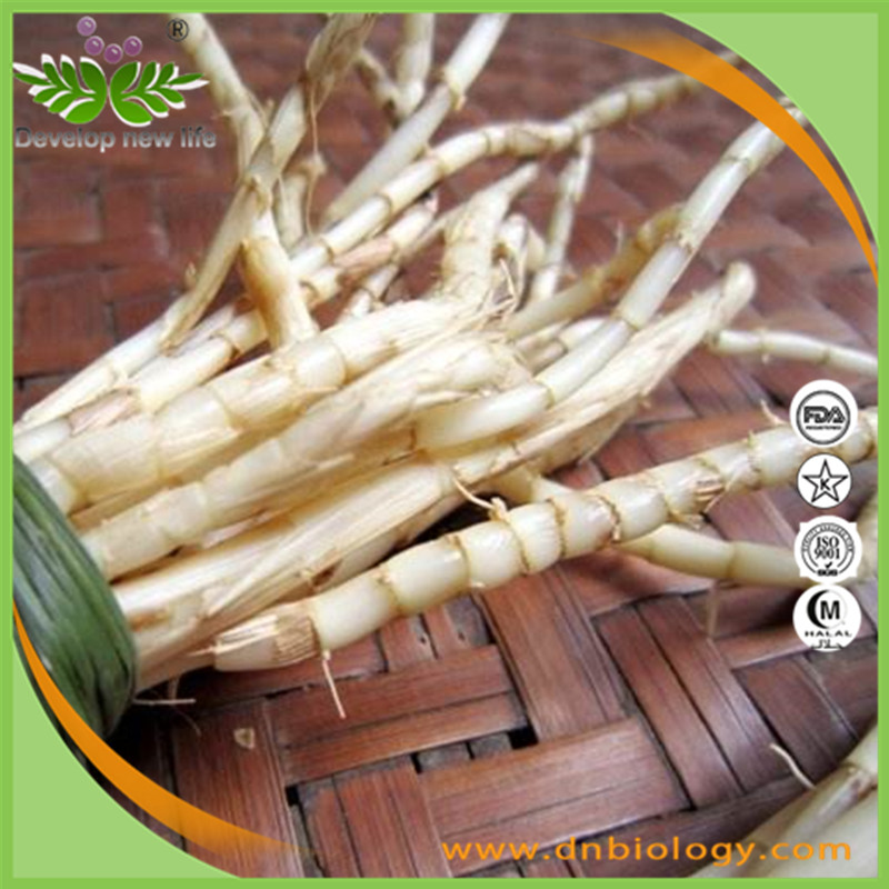 Factory Supply Lalang Grass Rhizome Extract / Imperata Cylindrica root extract