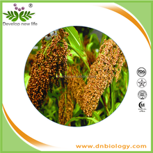 ISO9001 Factory ONLY one red sorghum extract,Sorghum bicolor (L.) Moench