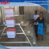 hot sale professional design battery chicken layer cage for Kenya