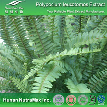 Top Quality Polypodium Extract,Polypodium Rhizome Extract,Polypodium P.E.