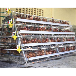 Poultry Farming Equipment a type layer chicken cage with automatic system for sale