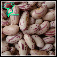 Chinese Origin HPS Quality Light Speckled Sugar Beans or Rajma Chitra A Grade For Sale