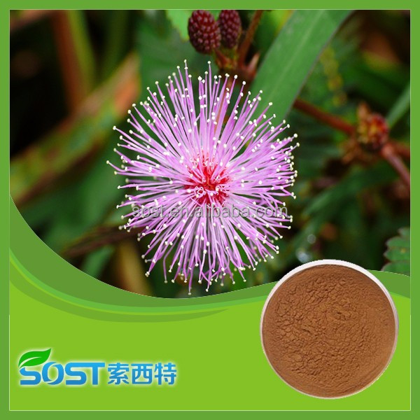 Hot sale and natural mimosa hostilis root bark extract powder with high quality