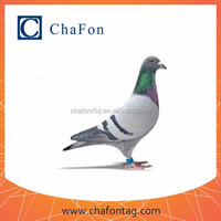 lf rfid pigeons racing ring can put TK4100 or Hitag S256 chip inside have different color for option made by ABS material