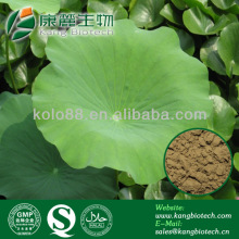 Greatest Fat burner weight loss lotus leaf powder