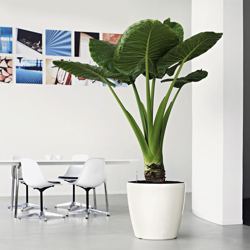 Large Volume Cheap Color Round Decorative Garden Office