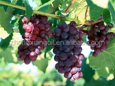 Anti-aging Grape Seed Carrier Oil For Healthy Food