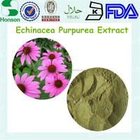 water soluble echinacea extract 4% polyphenol and 1% chicoric acid